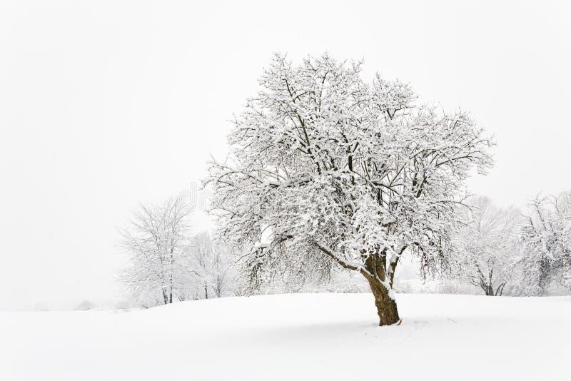 Snowy-Baum stockbilder