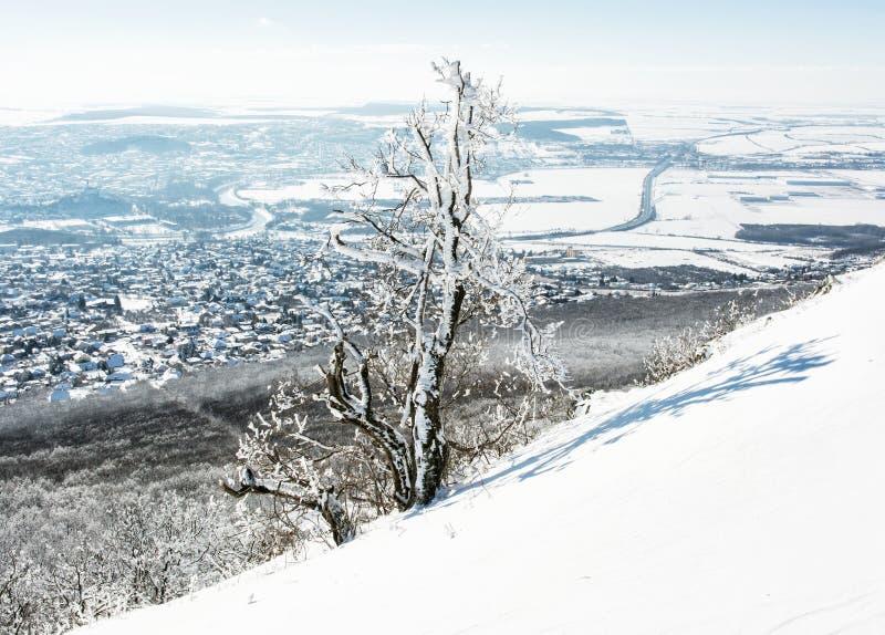 Snowy-Baum und -winter gestalten, Nitra-Stadt, Slowakei landschaftlich stockbilder