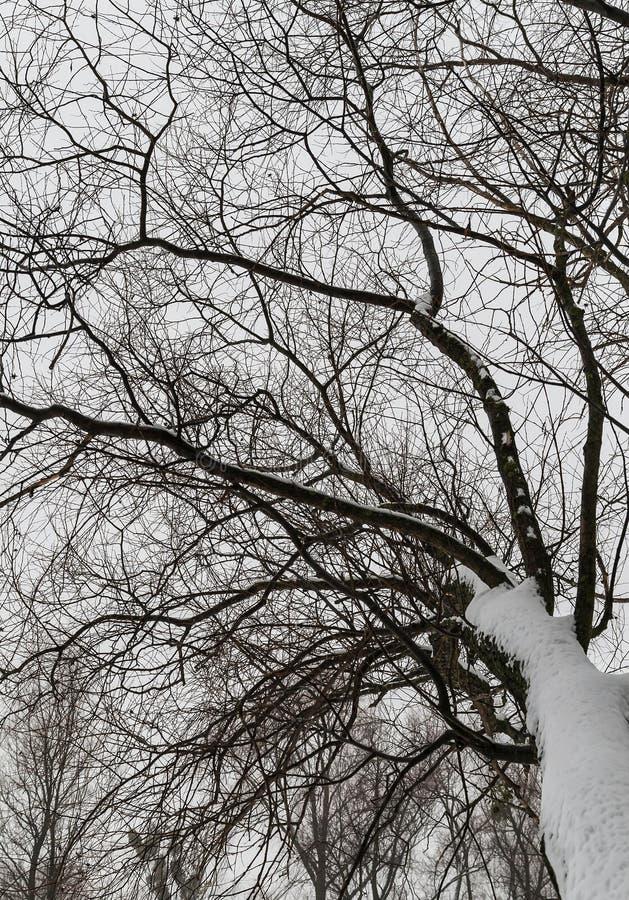 Snowy-Baumastansicht von unten nach oben stockfotografie