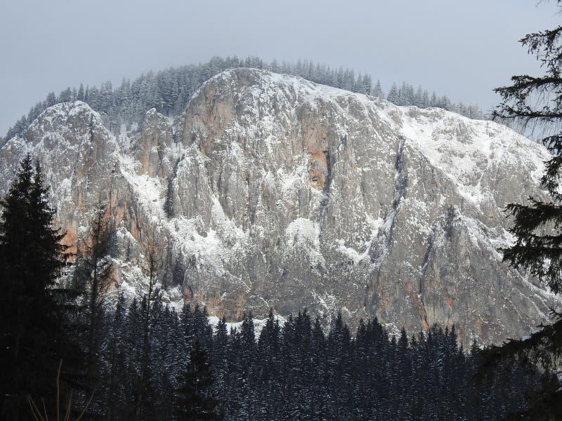 Snowy-Berglandschaft mit Holz und Schnee lizenzfreie stockbilder