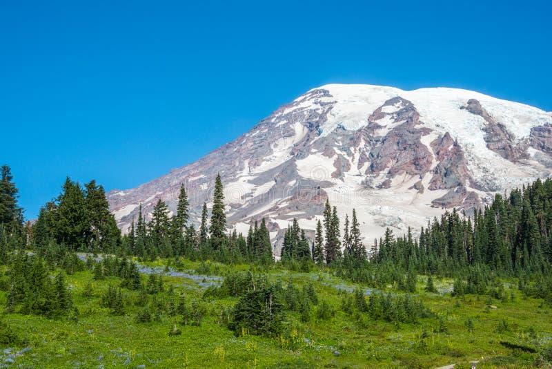 Snowy-Bergspitze Wildflowers und grüner Wald lizenzfreie stockfotos