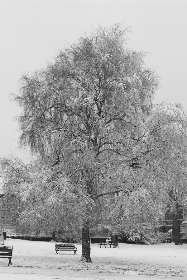 Download Snowy tree in park stock photo. Image of branches, tree - 29911924