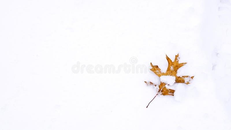 Snowy-Blatt stockfotos