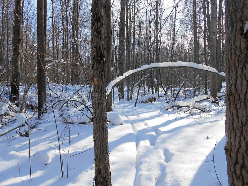 Snowy-Bogen im Winterwald stockfotos