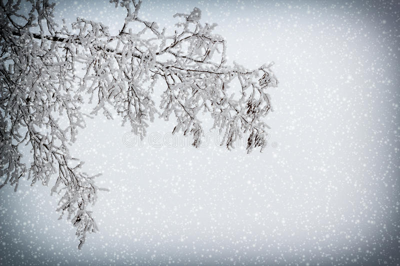 Download Snowy Branch With Vignette And Snowfall Stock Photo - Image: 28930216
