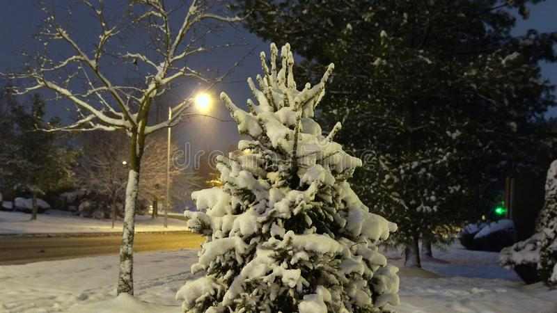Snowy city park in light of lanterns at evening. Snow-covered trees and benches, footpath in a fabulous winter night park. Winter. Snowy city park in light of royalty free stock photography