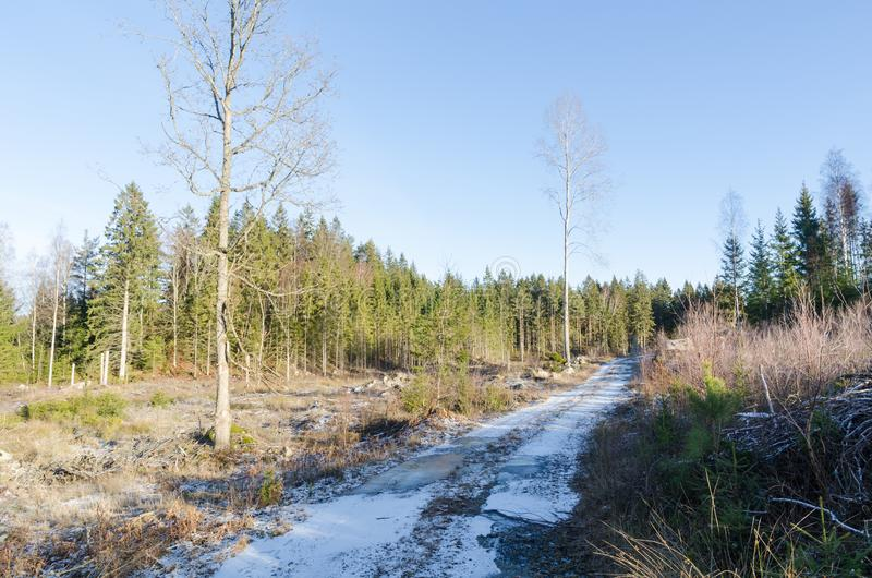 Snowy country road in the woods royalty free stock photography