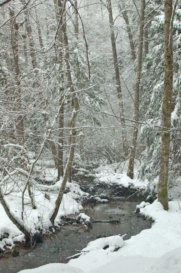 Snowy creek. In winter royalty free stock photo