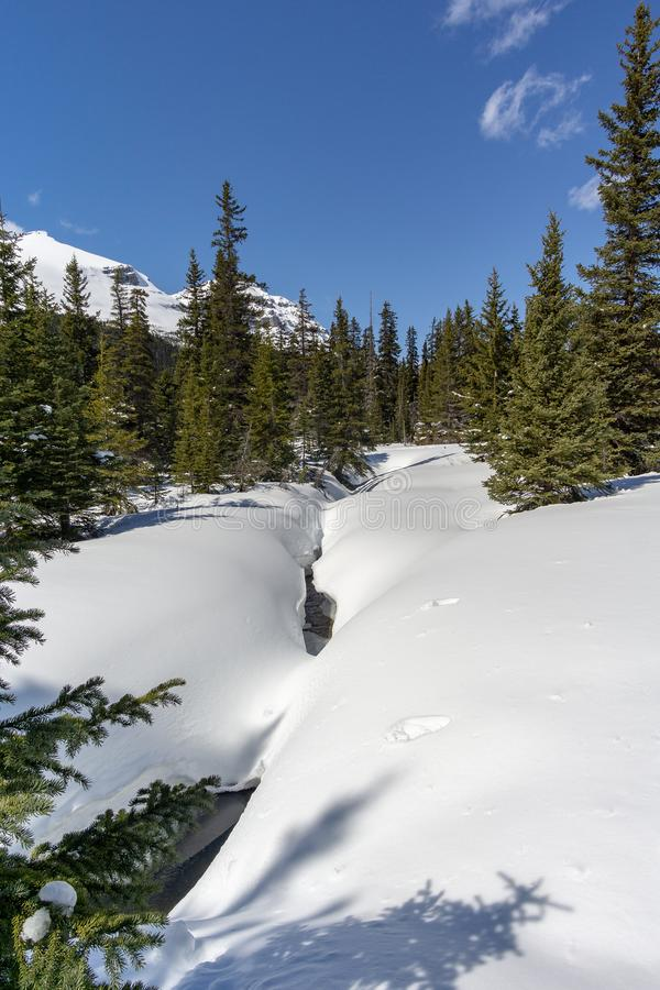 Snowy Creek. Snow covered creek in mountain evergreen forest stock photo