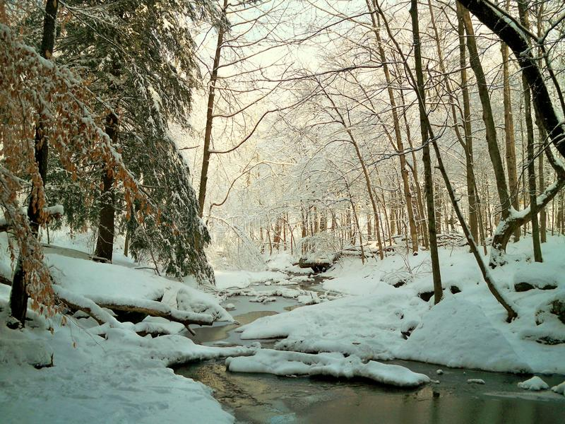 Snowy Creek. Snow covered trees and banks with a rippling creek looking down stream stock photos