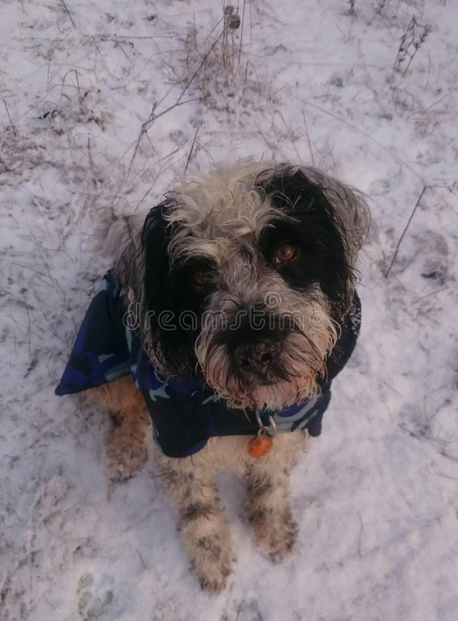 Snowy Dogday royalty free stock images