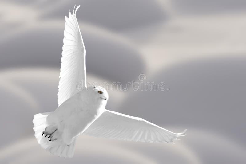 Snowy-Eule im Flug lizenzfreie stockfotografie