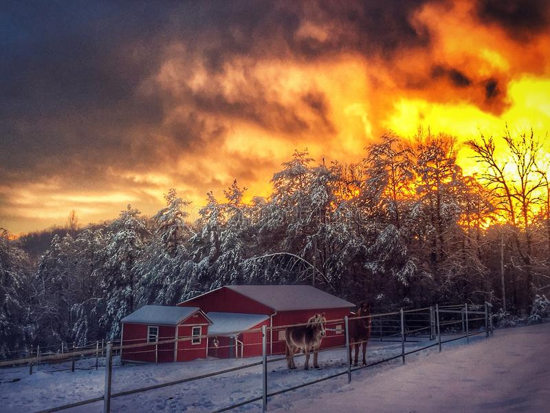 Snowy evening. This photo has so many beautiful things! Snow, horses, clouds, sunset royalty free stock photography