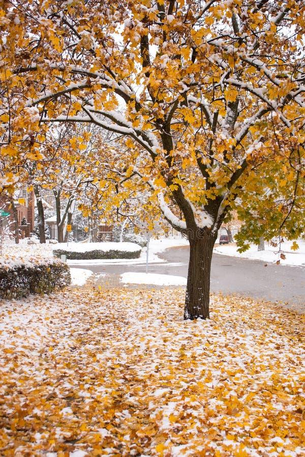 Snowy-Fallbaum stockbild