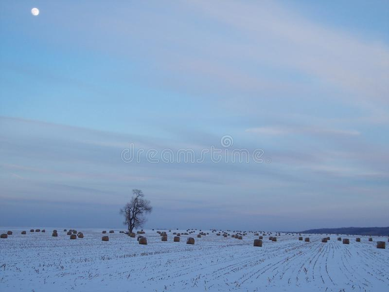 Snowy field with bales of hay and a lone tree at dusk with moon in the sky stock image