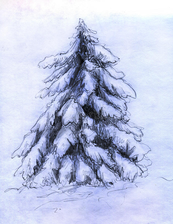 Download Snowy Fir Sketch Royalty Free Stock Image - Image: 17952306