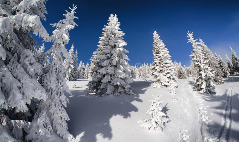 Snowy fir trees and blue sky. In beautiful winter forest. Fisheye lens. Great Fatra mountains, Slovakia stock images