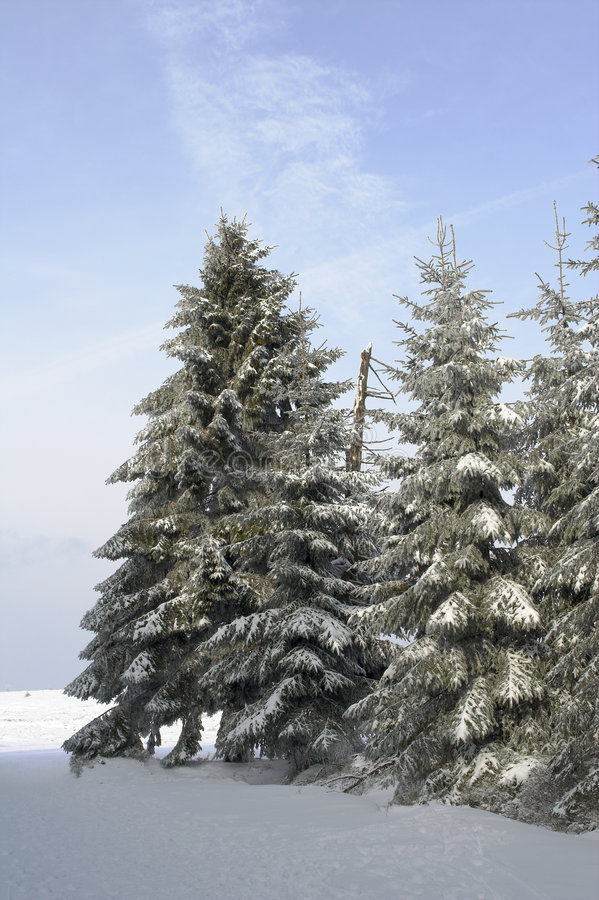 Download Snowy fir trees (pines) stock photo. Image of peace, frozen - 515064