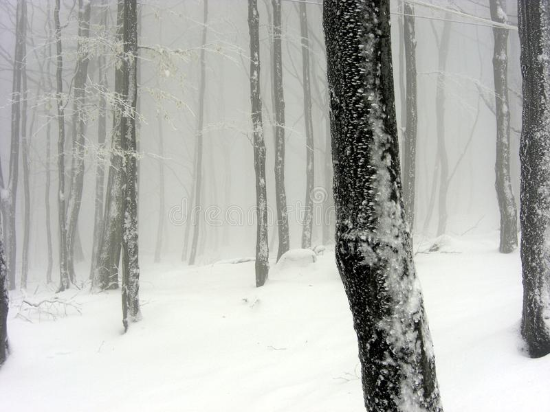 Download Snowy foggy landscape stock photo. Image of misky, snowy - 10319284