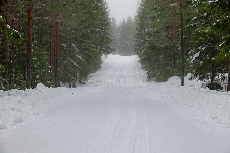 A snowy, foggy road in the forest royalty free stock images