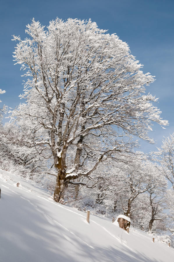 Download In a snowy forest stock image. Image of trees, winter - 10502239