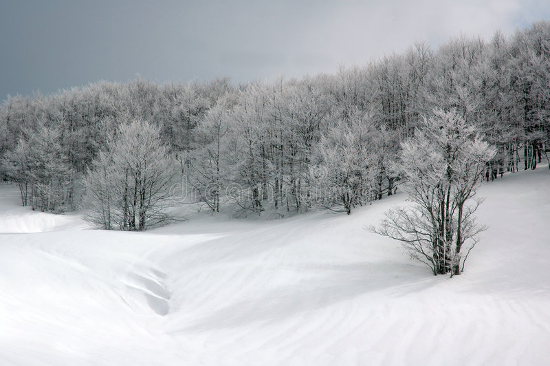 Snowy Forest. A snowy encounter in a forest near Lyon, France. Picture taken with Nikon D70 Camera royalty free stock photos