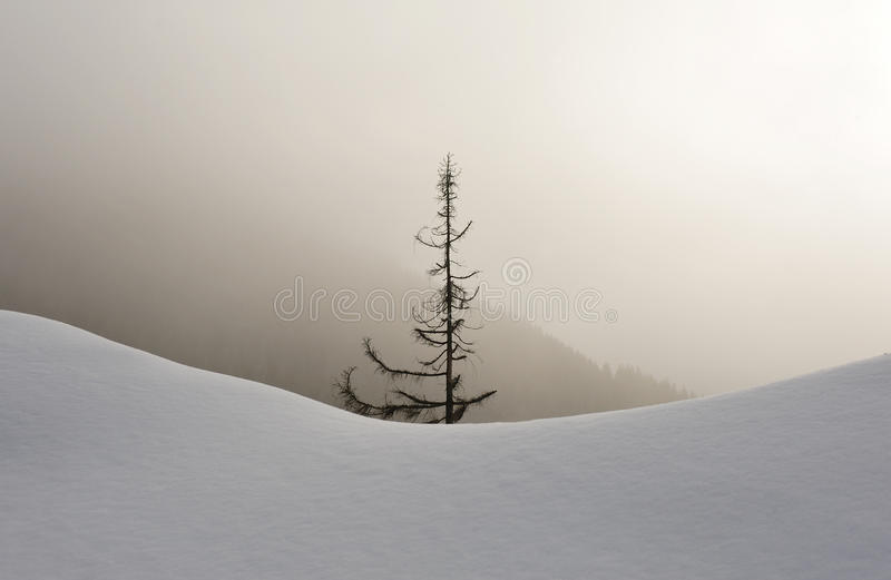Download Snowy forest in fog stock image. Image of nationalpark - 17406031