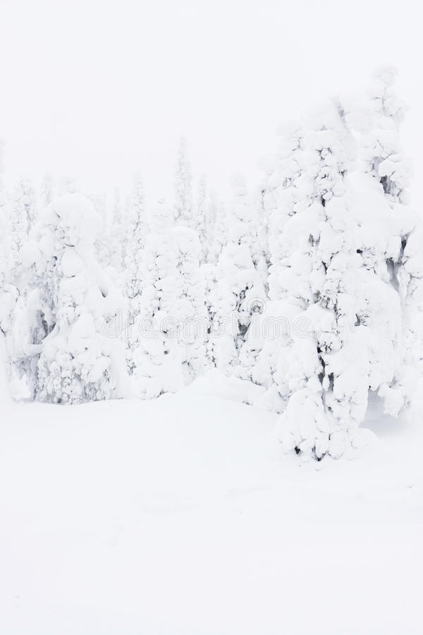 Snowy forest in Lapland, Finlanc stock images