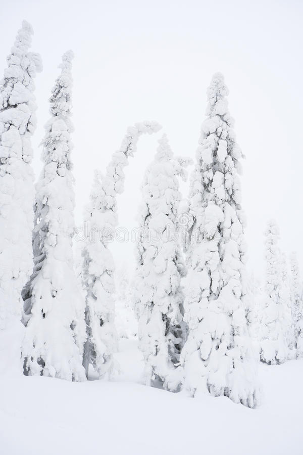 Snowy forest in Lapland, Finlanc royalty free stock photography