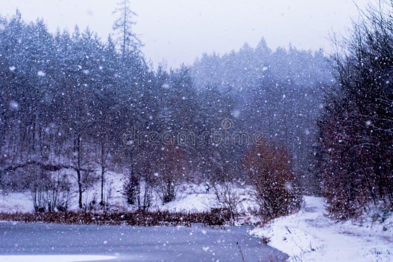 Forest in Czech Rebublic,. Snowy forest near Lelekovice, Czech Republic, Europe royalty free stock image