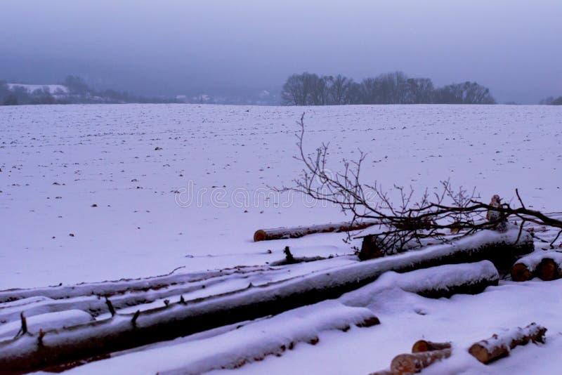 Forest in Czech Rebublic,. Snowy forest near Lelekovice, Czech Republic, Europe royalty free stock photography