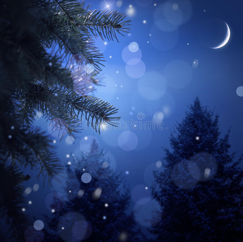 Free Snowy Forest On Christmas Night Stock Photo - 17520370