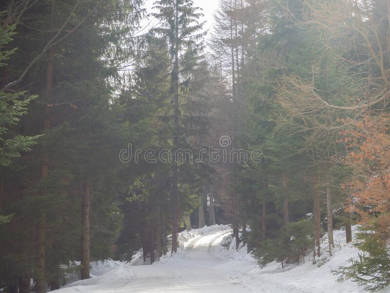 Snowy forest road on a foggy day. In winter stock image