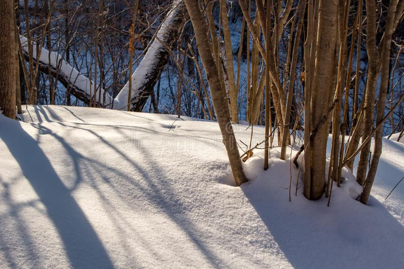 Snowy forest on a sunny winter day royalty free stock image