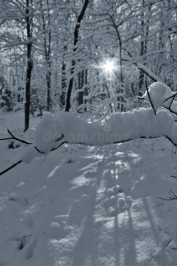 Snowy forest sunrise stock image