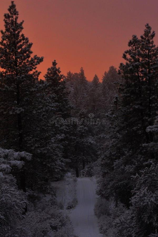 Snowy Forest Sunset immagini stock libere da diritti