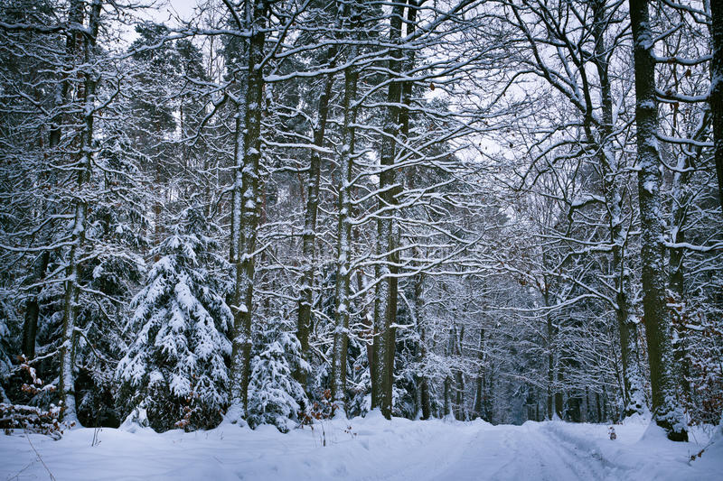 Snowy forest after whiteout stock photo