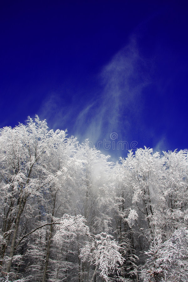 Snowy Forest During Winter Stock Image
