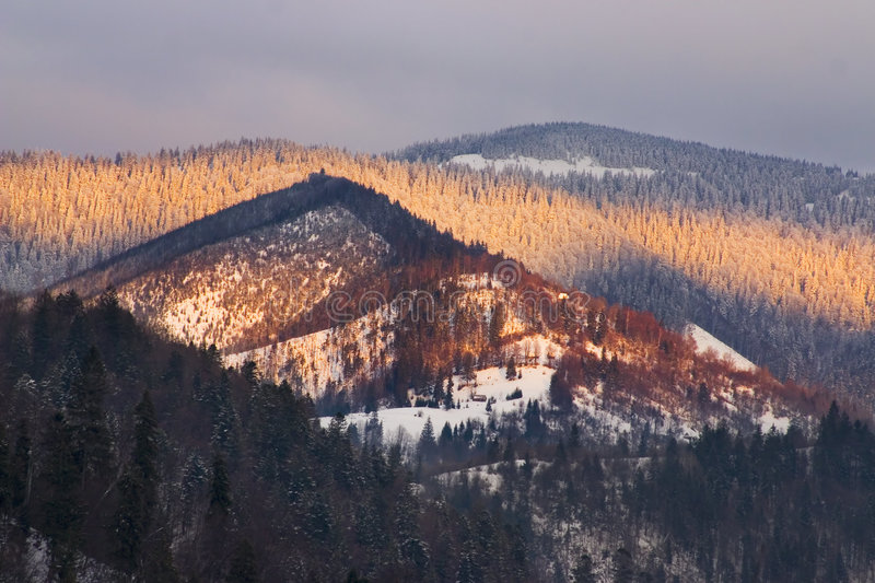 Snowy forested mountains
