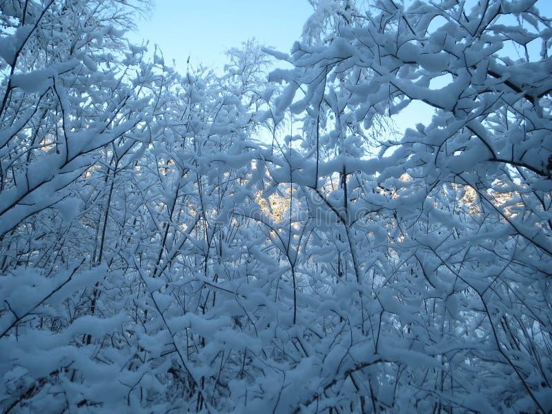 Snowy Forrest silenzioso a febbraio fotografia stock