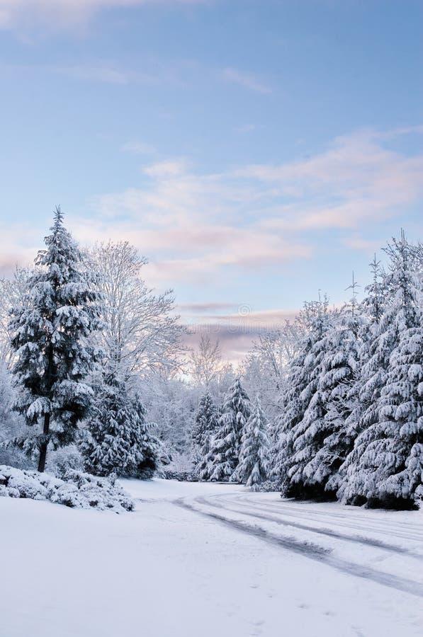 Snowy-früher Morgen lizenzfreies stockfoto