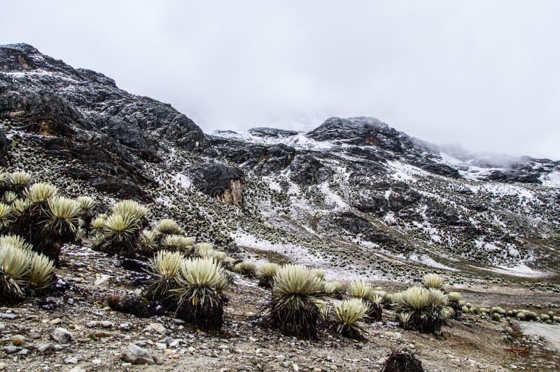 Snowy Frailejones 2. Snow valley with frailejones from La Culata National Park in Merida, Venezuela stock photos