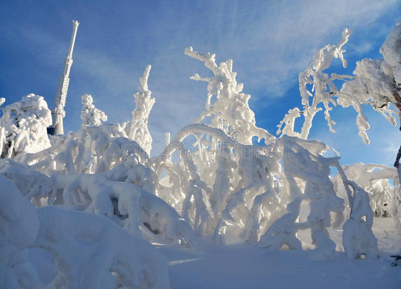 Snowy frosted trees. Abstract formations royalty free stock image