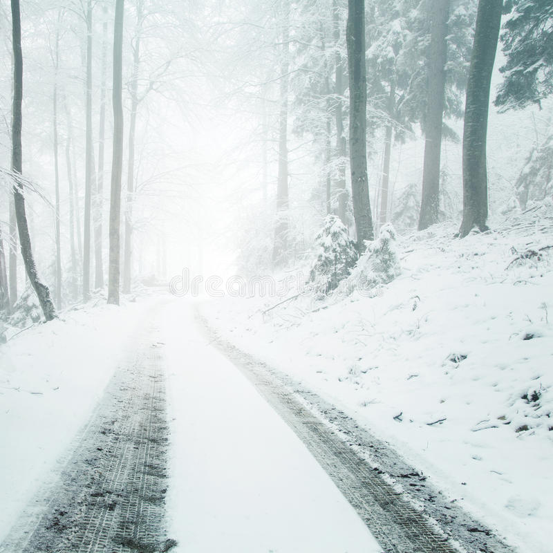 Snowy frozen forest road royalty free stock photo