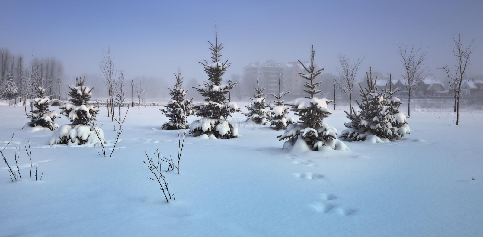 Download Snowy fur-trees stock photo. Image of traces, landscape - 17473828