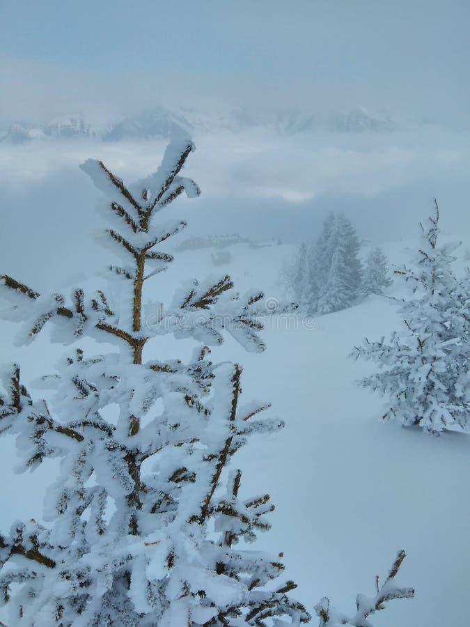 Snowy-Gebirgsbäume lizenzfreie stockbilder