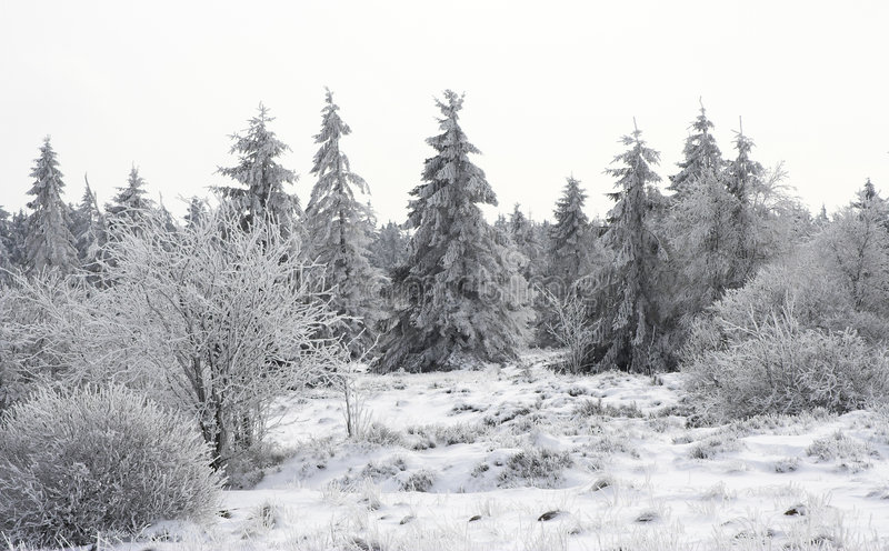 Download Snowy glade stock photo. Image of overcast, gentle, graphic - 515066