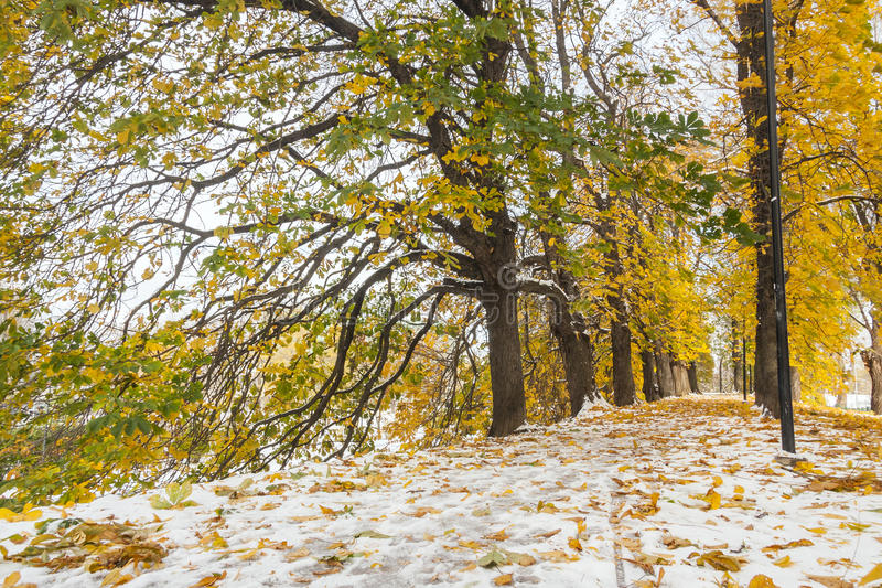 Snowy golden autumn avenue at winter royalty free stock photo