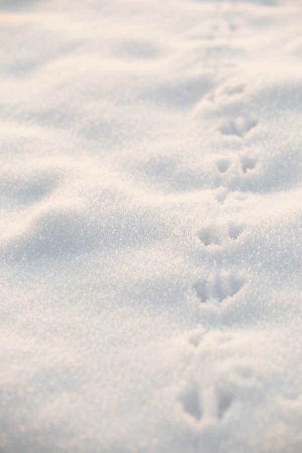 Snowy ha frantumato con le piste animali immagini stock libere da diritti