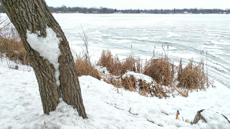 Snowy Heart on Tree by Lake royalty free stock photos